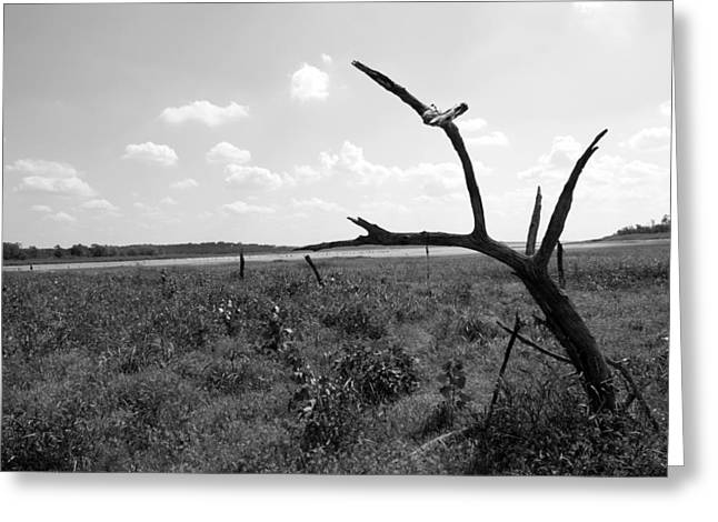 Grapevine Photographs Greeting Cards - Old Lake Bed Greeting Card by Sean Keil