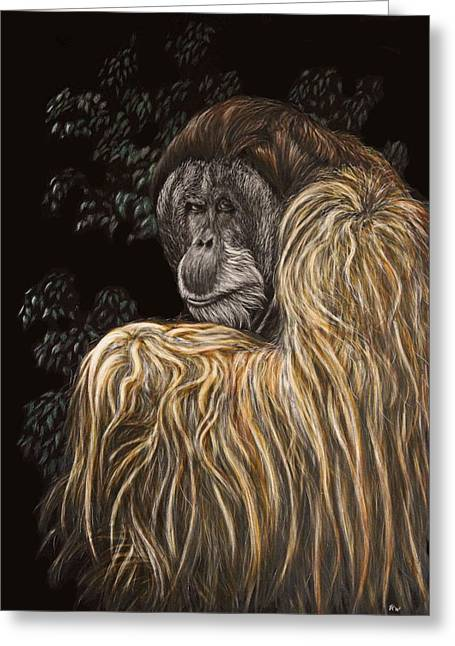 Orangutan Drawings Greeting Cards - Old Man of the Forest Greeting Card by Heather Ward