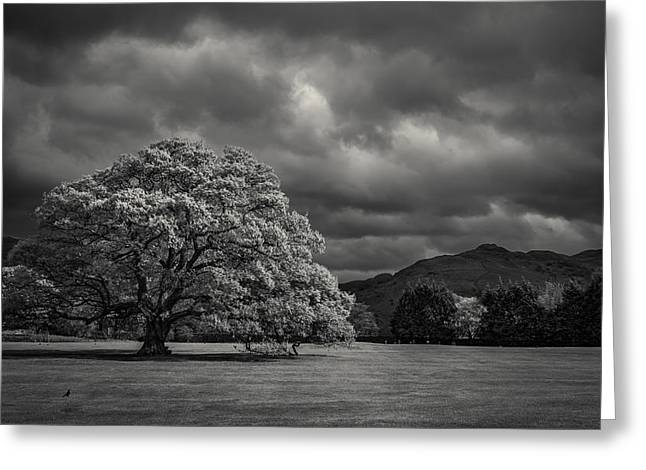Old Tree Greeting Cards - Old oak Greeting Card by Chris Fletcher