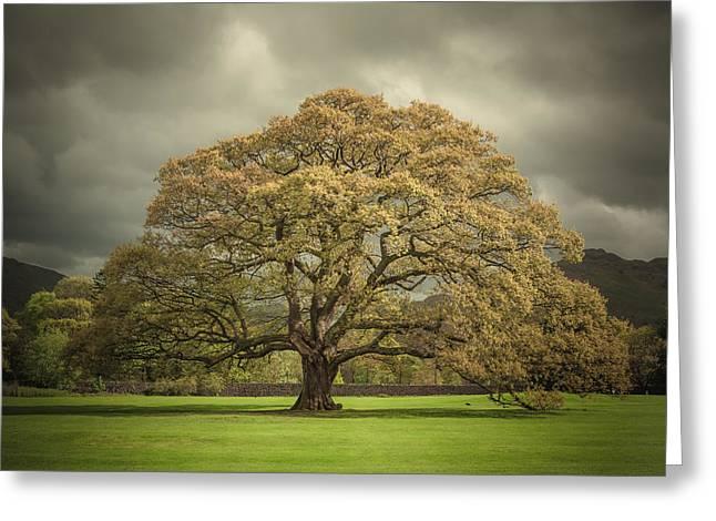 The Old Oak Of Glenridding Greeting Card by Chris Fletcher