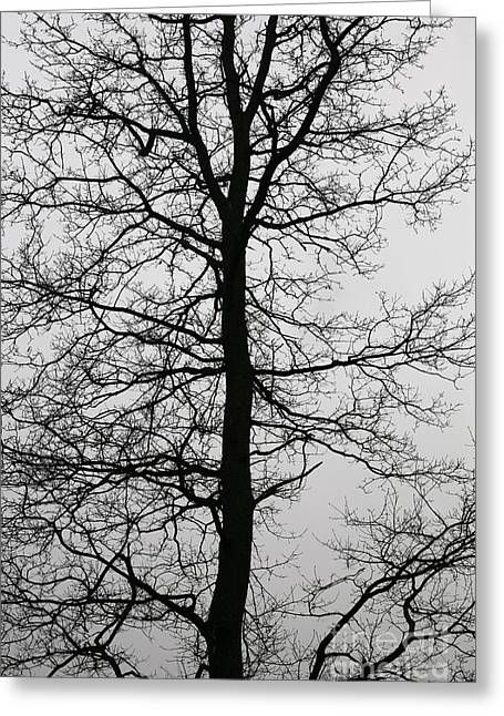 Old Oak In The Grey Sky.  Greeting Card by Tanya Polevaya