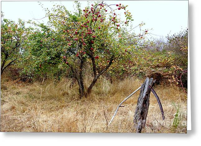 Recently Sold -  - Farm Stand Greeting Cards - Old Orchard Greeting Card by Erin Baxter