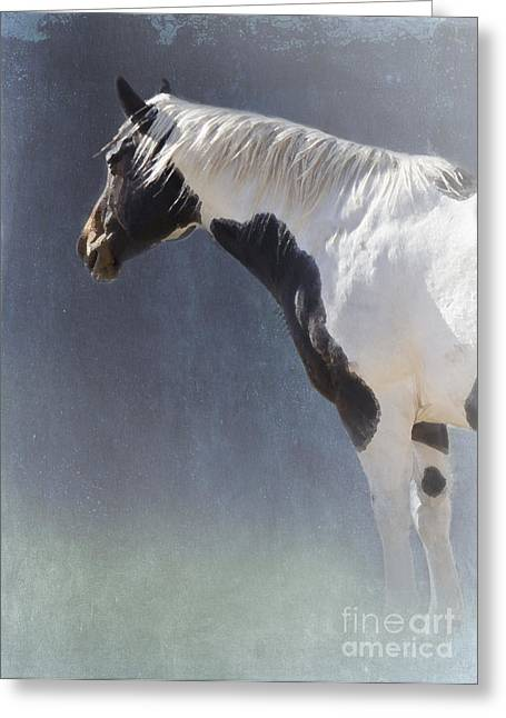 Quarter Horse Digital Art Greeting Cards - Old Paint Greeting Card by Betty LaRue