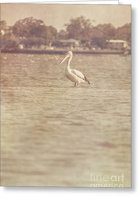 Deception Beach Greeting Cards - Old pelican photograph Greeting Card by Ryan Jorgensen