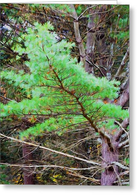 Old Objects Paintings Greeting Cards - Old pine tree 1 Greeting Card by Lanjee Chee