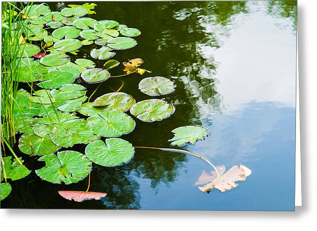 Old Pond - Featured 3 Greeting Card by Alexander Senin