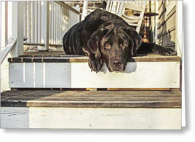 Old Porch Dog Greeting Card by Diane Diederich