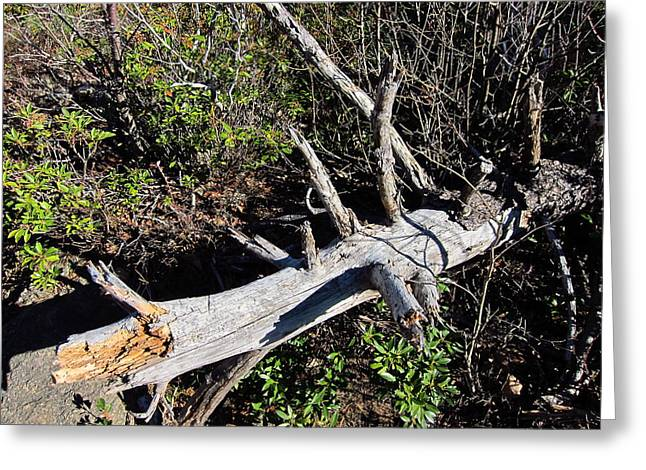 Trails Greeting Cards - Old Rag Hiking Trail - 121244 Greeting Card by DC Photographer