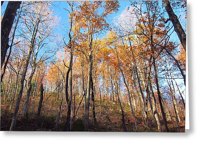 Old Rag Hiking Trail - 121258 Greeting Card by DC Photographer