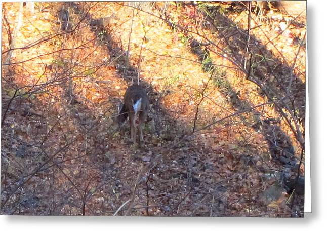 Hike Photographs Greeting Cards - Old Rag Hiking Trail - 121265 Greeting Card by DC Photographer