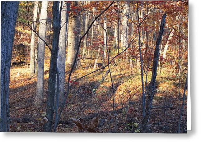 Hike Greeting Cards - Old Rag Hiking Trail - 121266 Greeting Card by DC Photographer