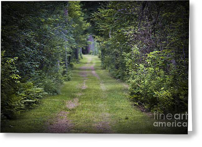 Foreboding Greeting Cards - Old road through forest Greeting Card by Elena Elisseeva