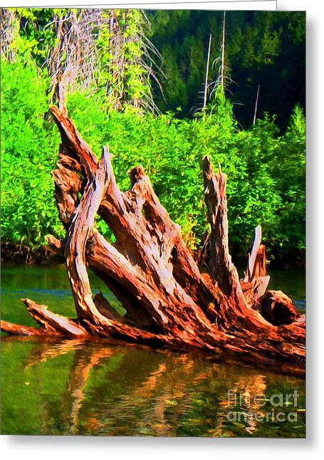 Tree Roots Mixed Media Greeting Cards - Old Roots in the River Greeting Card by John Kreiter