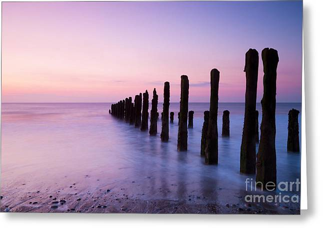 Beach Wear Greeting Cards - Old Sea Defence Posts at Sunrise Greeting Card by Colin and Linda McKie