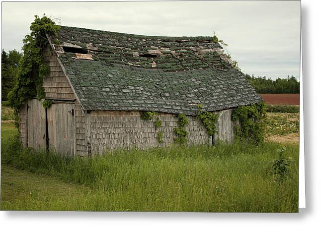 Princes Greeting Cards - Old Shed Greeting Card by Ron Pringle