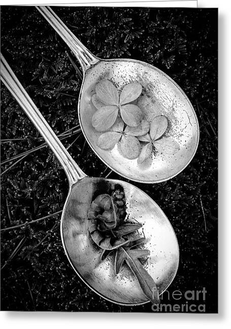 Bright. Table Greeting Cards - Old Silver Spoons Greeting Card by Edward Fielding
