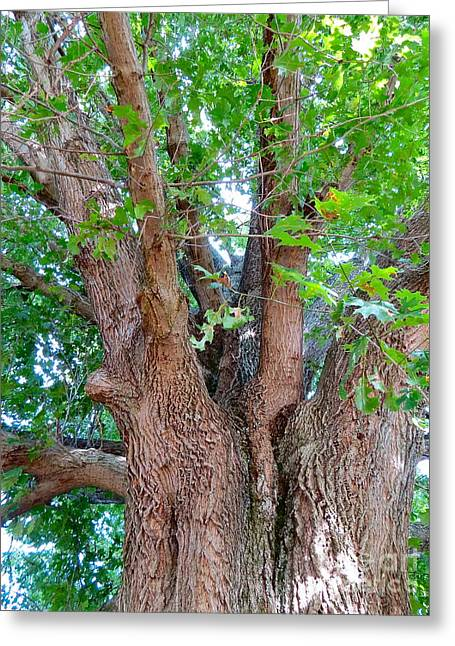 Carnton Plantation Greeting Cards - Old Souls Oak Greeting Card by Aimee Mouw
