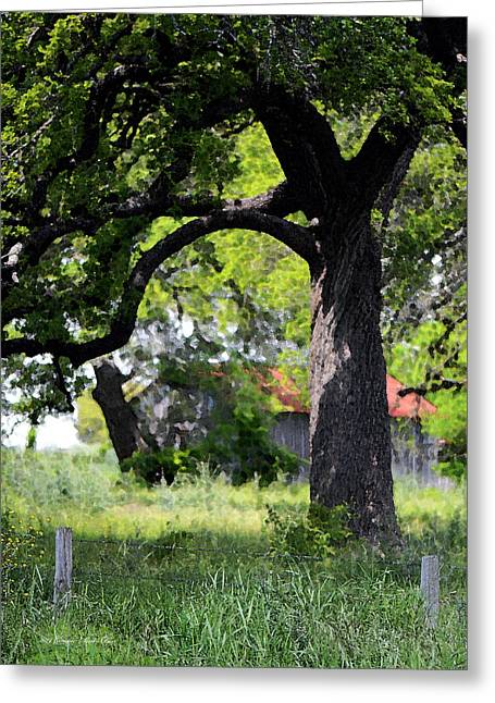 Dappled Light Greeting Cards - Old Texas Oak Tree Greeting Card by Connie Fox