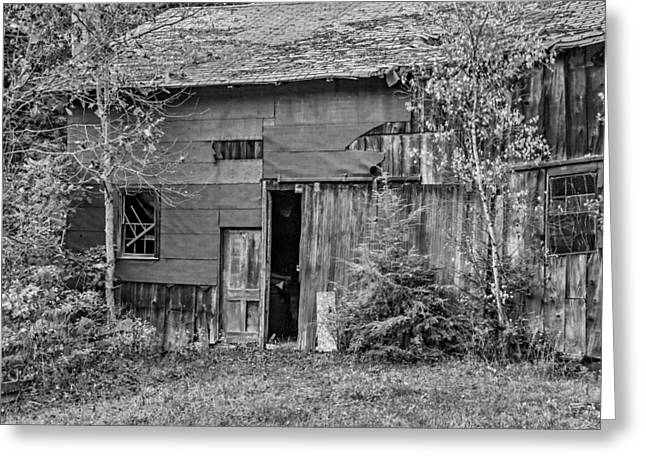 Overgrown Greeting Cards - Old Timer BW Greeting Card by Steve Harrington
