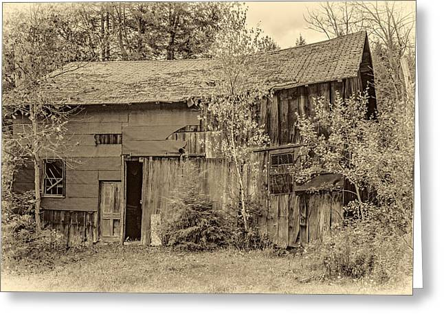 Overgrown Greeting Cards - Old Timer sepia Greeting Card by Steve Harrington