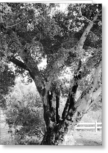 Photos Of Trees Greeting Cards - Old Tree Greeting Card by Gilbert Artiaga