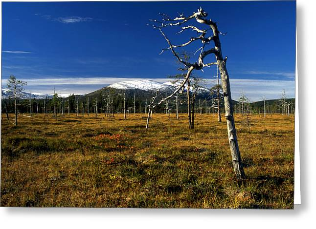 Abstract Style Greeting Cards - Old Tree In The Mountain Greeting Card by IB Photo