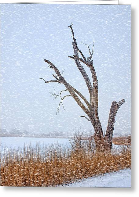 Recreational Park Greeting Cards - Old Tree in Winter Greeting Card by Nikolyn McDonald