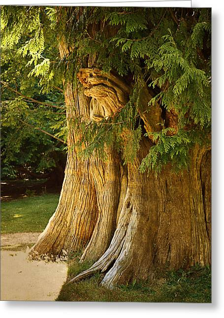 Stanley Park Greeting Cards - Old tree Greeting Card by Maria Angelica Maira