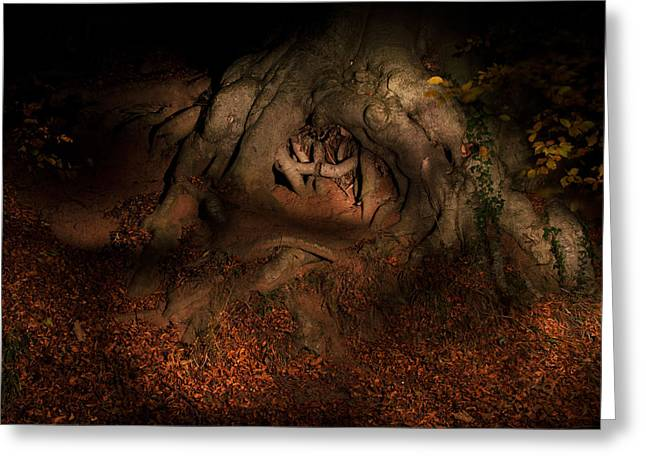 Tree Roots Greeting Cards - Old Tree Roots Paxton House Grounds. Greeting Card by Niall McWilliam