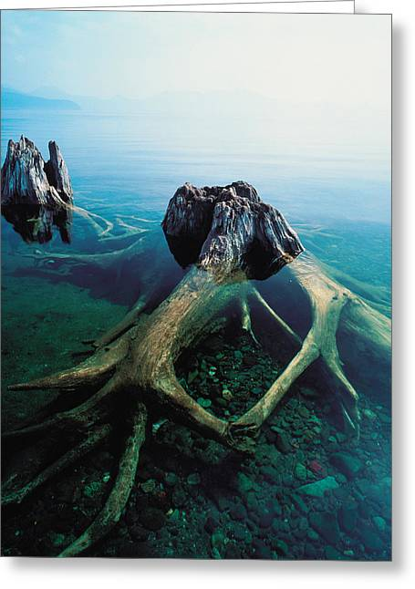 River View Photographs Greeting Cards - Old Tree Trunks Underwater Greeting Card by Panoramic Images
