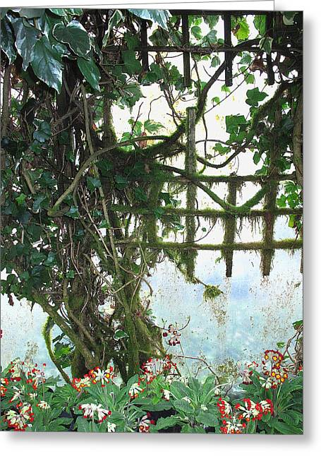 Trellis Greeting Cards - Old Trellis Greeting Card by Debra Boyle