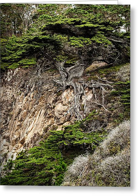 Point Lobos Reserve Greeting Cards - Old Veteren Cypress Tree Greeting Card by George Buxbaum