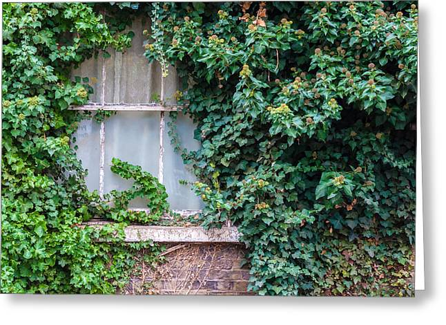 Overruns Greeting Cards - Old Window Covered in Ivy Greeting Card by Chay Bewley