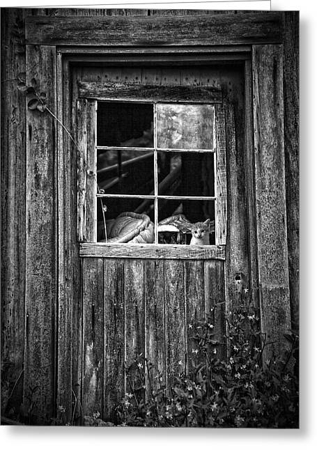 White Fur Greeting Cards - Old Window Greeting Card by Garry Gay