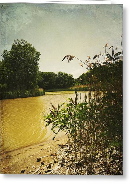 Subtle Colors Greeting Cards - Old Woman Creek  Greeting Card by Shawna  Rowe