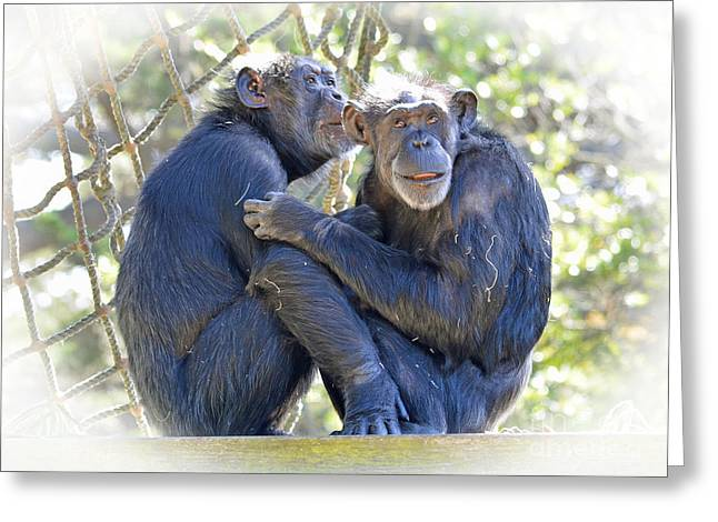 Hands To Face Greeting Cards - Olderly Chimpanzees Embracing Fade To White Version Greeting Card by Jim Fitzpatrick