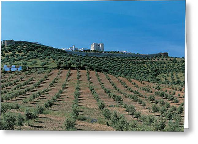 Olive Grove Greeting Cards - Olive Groves Evora Portugal Greeting Card by Panoramic Images