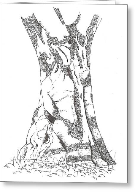 Olive Drawings Greeting Cards - Olive tree 4 Greeting Card by Norm Keech