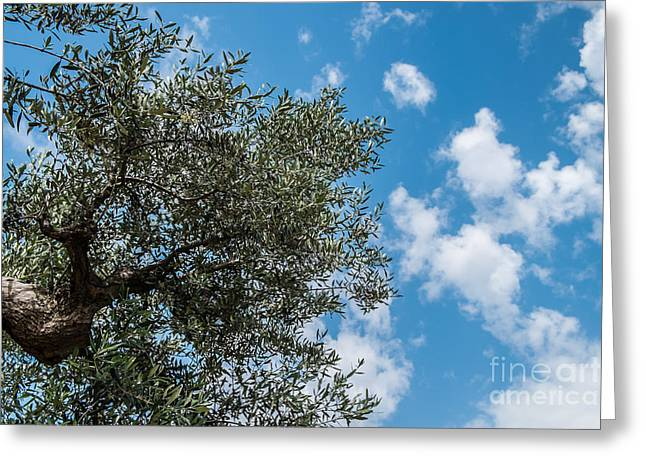 Olive Branch Greeting Cards - Olive tree Greeting Card by Sabino Parente