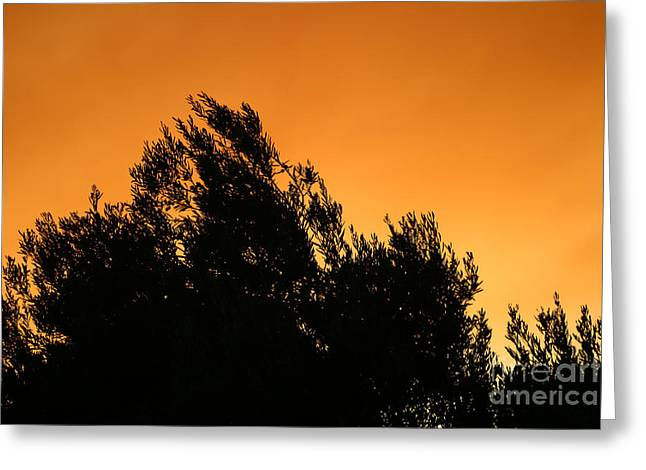 Oleaceae Greeting Cards - Olive Tree Silhouette At Sunset Greeting Card by Leyla Ismet