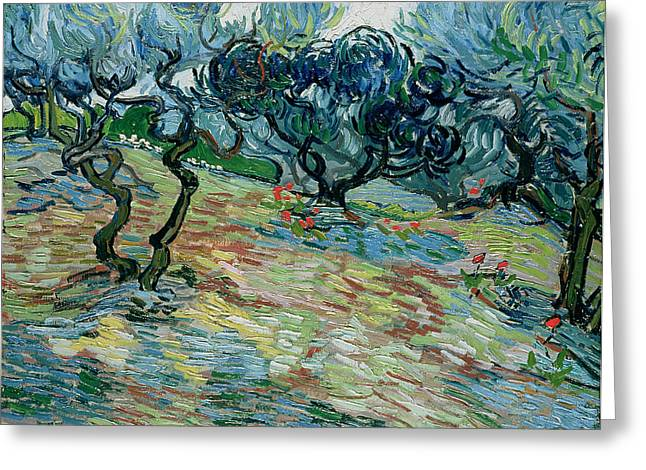 Orchard Photographs Greeting Cards - Olive Trees, 1889 Oil On Canvas Greeting Card by Vincent van Gogh