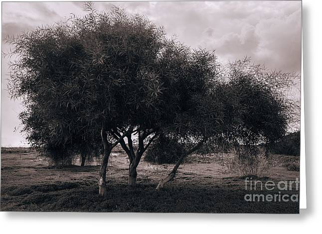 Olive Pyrography Greeting Cards - Olive trees Greeting Card by Artem Korenuk
