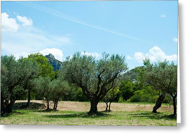 Olive Greeting Cards - Olive Trees In Front Of The Ancient Greeting Card by Panoramic Images