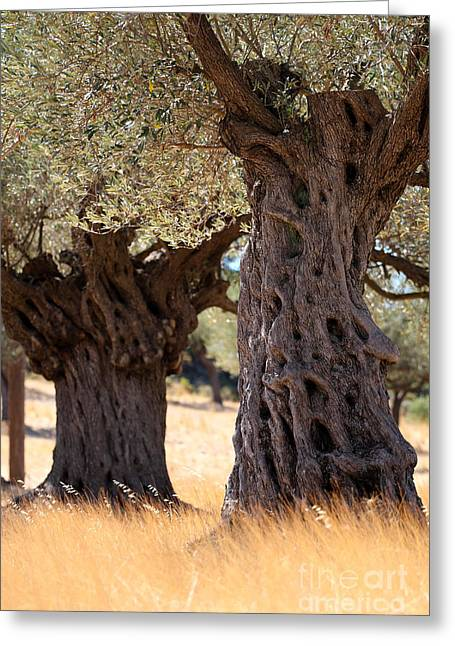 Olive Yellow Grass Greeting Cards - Olive Trees Greeting Card by Jana Behr