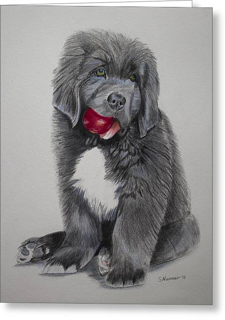 Newfoundland Puppy Greeting Cards - Olivers Red Ball Greeting Card by Sharon Nummer