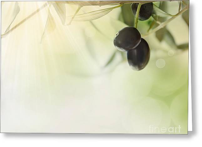 Mythja Greeting Cards - Olives design background Greeting Card by Mythja  Photography