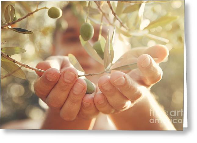 Mythja Greeting Cards - Olives harvest Greeting Card by Mythja  Photography