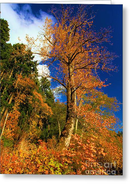 Lake Crescent Greeting Cards - Olympic Fall Greeting Card by Adam Jewell