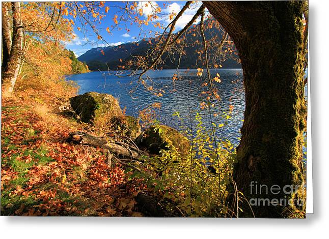 Lake Crescent Greeting Cards - Olympic Fall Crescent Greeting Card by Adam Jewell