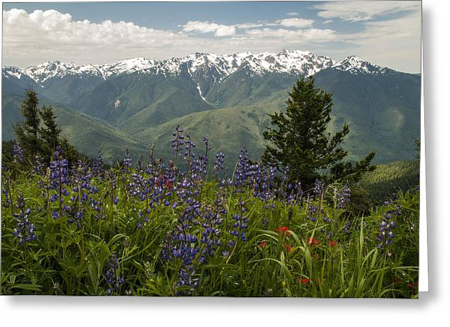 Still Life Photographs Greeting Cards - Olympic Mountain Wildflowers Greeting Card by Brian Harig